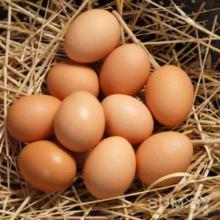 Продажа куриного яйца С1 с дисконтом от птицы фабрики объявление продам