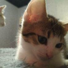 Котята в добрые руки объявление отдам даром