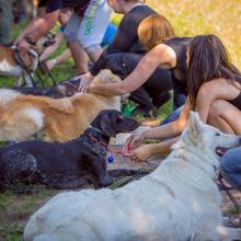 Групповая дрессировка собак всех пород в Минске объявление услуга