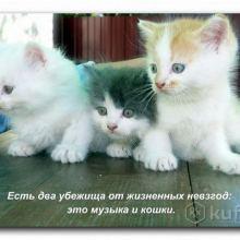 Животные объявление продам
