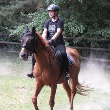Катание/обучение на пони/лошади для деток и взрослых, фотосессия, отдых объявление продам