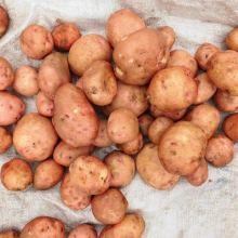 Картофель объявление продам