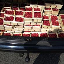 Саженцы малины, клубники объявление продам
