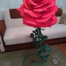 Ростовые цветы объявление продам