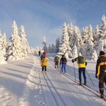 Лыжи беговые в аренду в Зеленом луге объявление услуга