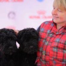 Шикарные щенки русского черного терьера объявление продам