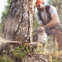 Спил деревьев, кустов объявление продам
