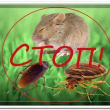 Травля тараканов, блох, вшей, клопов, муравьев в Витебске объявление услуга