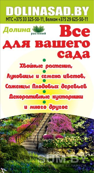 Семена овощей и цветов, саженцы в Гомеле объявление продам