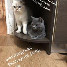 Котята объявление продам