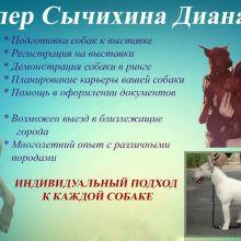 Подготовка собаки к выставке (услуги хендлера) объявление услуга