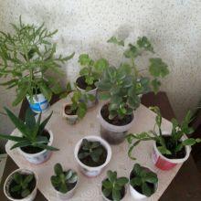 Комнатные растения объявление продам